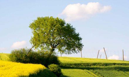 Wohlstand ist mehr als nur Geld – Grünes Wirtschaften fürs Gemeinwohl